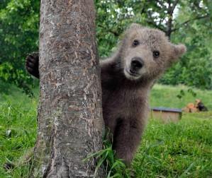 peek-a-bear_1910971i